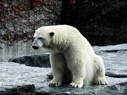 Ice Bear Wallpapers 19719 1024x768 Pictures 1367