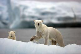 Great Ice Bears Hd Wallpaper | Wallpaper List 1614