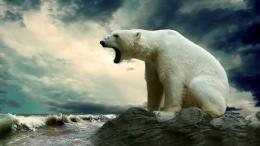 Description: The Wallpaper above is Polar bear hd Wallpaper in 277