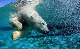 15+ Ice King Polar Bear HD Wallpaper Pack For Animal LoversStugon 1349