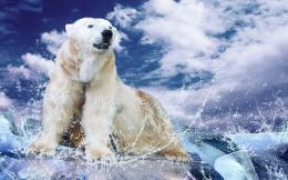 Polar bear on ice wallpapers and imageswallpapers, pictures, photos 1332