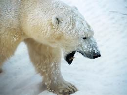 15+ Ice King Polar Bear HD Wallpaper Pack For Animal LoversStugon 827
