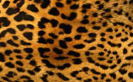 Leopard Print Wallpaper, Leopard Print iPhone Wallpaper, Leopard Print 1130