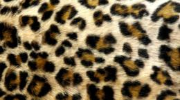 Leopard Print Live Wallpaperscreenshot 1731