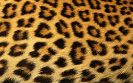 Leopard Print Background X | Free Images at Clker comvector clip 327