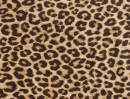 Wallpapers Animal Print De Corazones 1920x1200 | #549109 #animal print 279