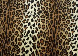 Download Cheetah Print HD Wallpapers 834