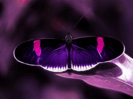 Purple Butterfly Backgrounds | wallpaper, wallpaper hd, background 799