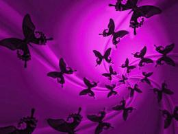 News Butterfly: Purple Butterfly Wallpaper 1053