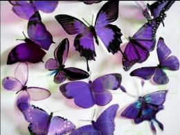 Purple ButterfliesButterflies Wallpaper17473487Fanpop 1349