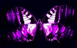 Wallpapers ForCool Purple Butterfly Wallpapers 1465