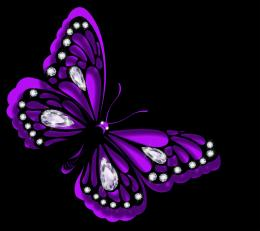 Purple butterfly beauty lovely black blings HD Wallpaper 1190