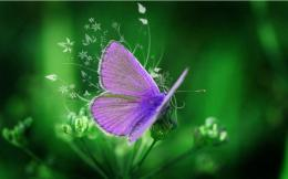 Purple Butterfly Wallpapers | wallpaper, wallpaper hd, background 1200