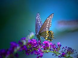 Butterfly Purple Wallpapers #10970 Wallpaper | WallDiskPaper 758