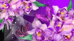 HQ DESKTOP WALLPAPERS: Purple Wallpapers and HD Backgrounds 787