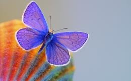 Purple Butterfly Wallpaper 1670