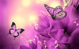 Purple Flowers Butterflies HD Wallpaper 1649