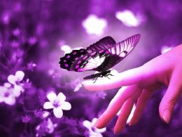 The Gallery by PurpleButterfly: Purple Backgrounds HD 205