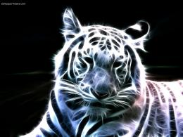 neon fractal tigertiger wallpaper 388