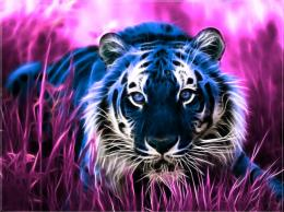 blue Tiger photo Fractal Tiger Wallpaper by PimArt jpg 993