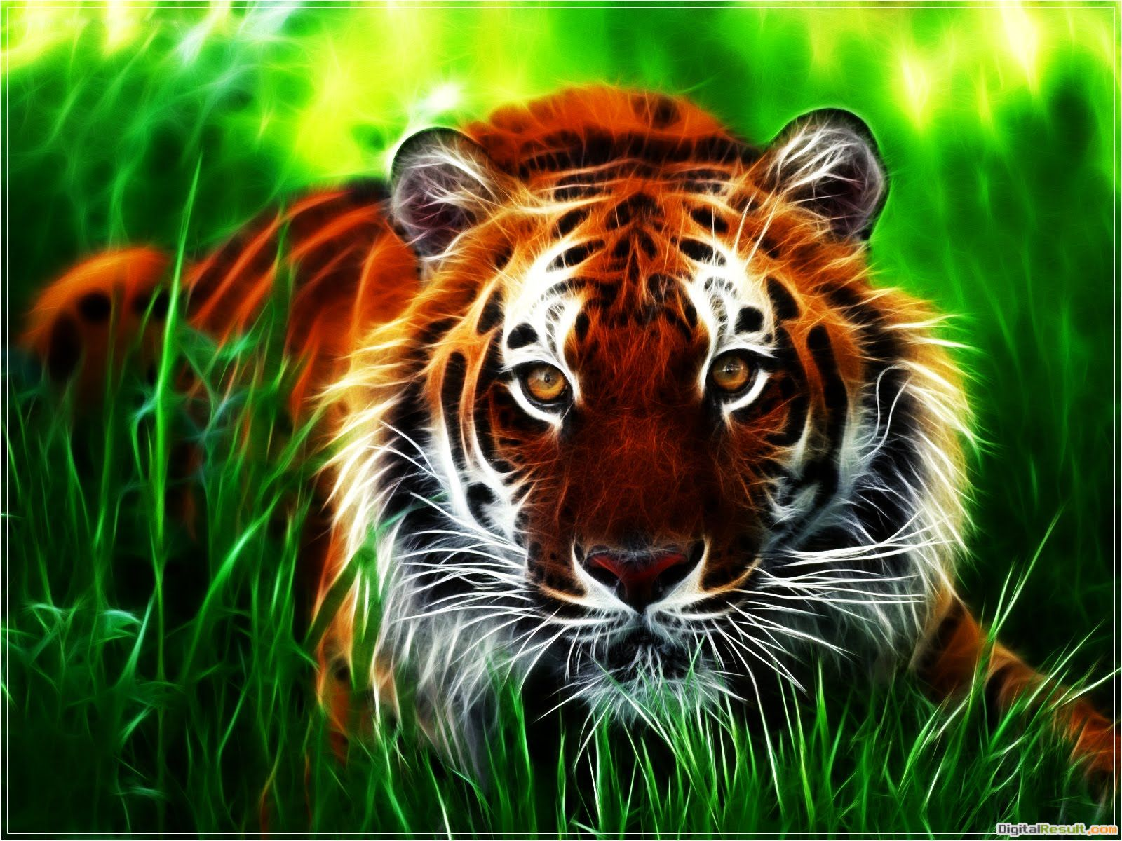 Tiger wallpapers 1706