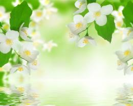 Flower reflection white green abstract 3d HD Wallpaper 1125