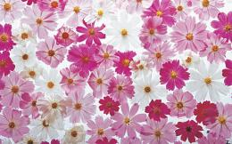 Pretty flowers white petals pink abstract HD Wallpaper 1647