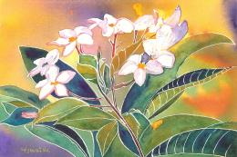 White Frangipani Flowers Painting Abstract hd wallpaper #167594 770