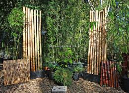 bamboos go well indoors in pots or planters on a balcony, verandah 1251