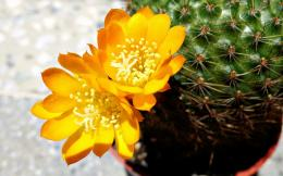 months ago Cactus , Cactus Wallpapers , Wallpapers Wallpapers 596