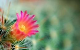 cactus flower background green needles 1920x1200 wallpapers 1993