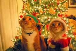 Christmas gift wallpapers and make this Cat Christmas gift wallpapers 1904