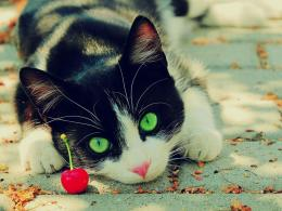 Download Curious cat nearby a cherry wallpaper in Animals wallpapers 1224