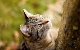 Curious Cat Wallpapers   HD Wallpapers 1218