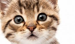 Cute Curious Cat Hd Wallpaper | Wallpaper List 854