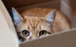 Curious Cat In The Box Hd Wallpaper | Wallpaper List 692
