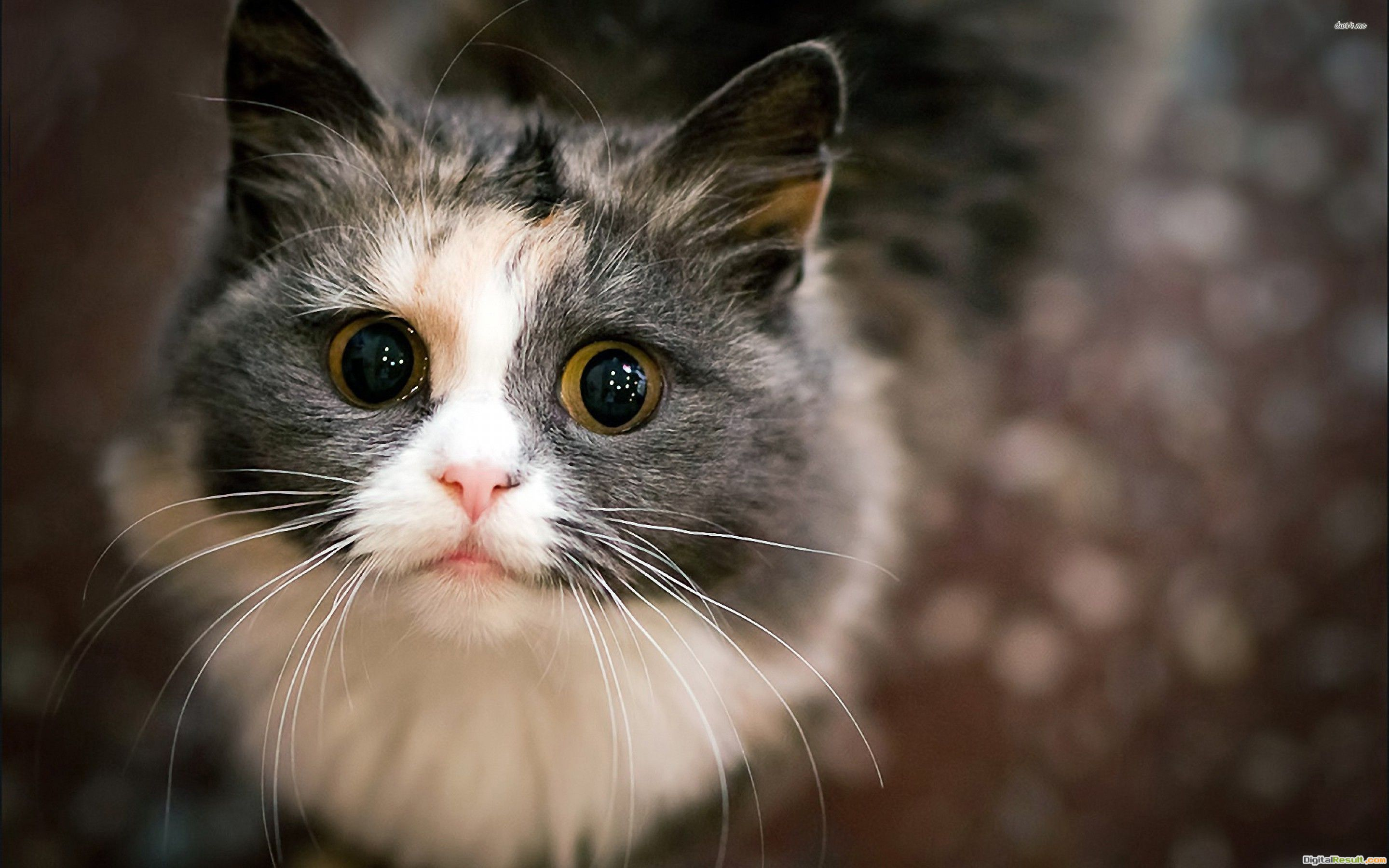 Curious Cat wallpapers HD free421044 1100