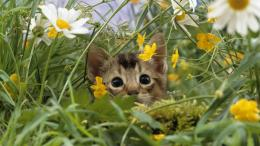 Curious Kitten in bush flowers wallpaper in Animals wallpapers 1331