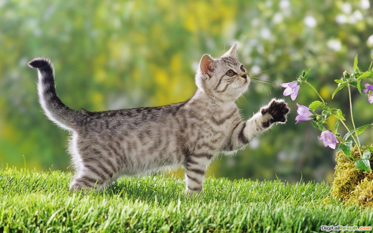 Curious cat playing with flowers wallpaper in Animals wallpapers 1046
