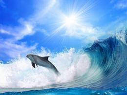 1152x864 Dolphin jump Wave Wallpaper 873