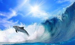 Dolphin jumping over the wave wallpaper 508