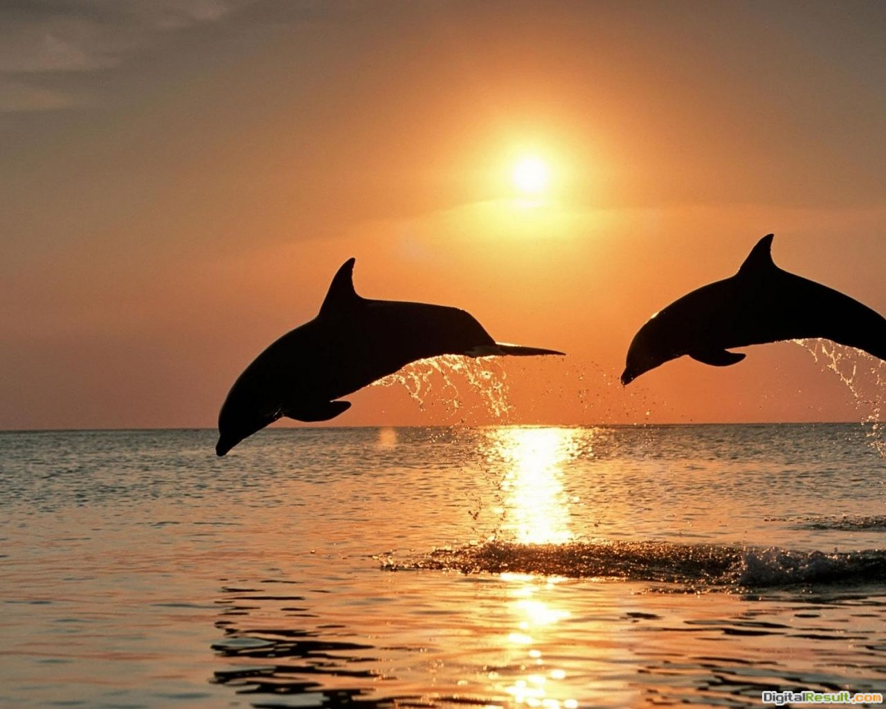 PicturesDownload Dolphin Wallpapers Wallpaper Dolphin Wallpaper 268
