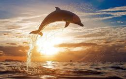 dolphin jumping high out of the water at sundown hd dolphin wallpaper 130
