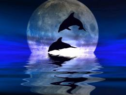 Pin Dolphin Wallpaper 10760 Hd Wallpapers on Pinterest 1599