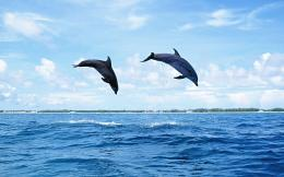 Download Dolphin wallpaper with dolphins jumping high out of the water 1906