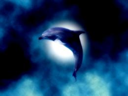 Dolphin Moon by Tsukku on DeviantArt 1401