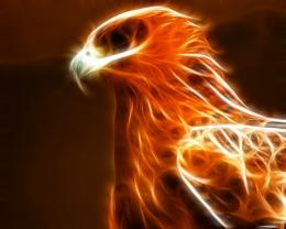 Pics PhotosPhoenix Bird Wallpapers Phoenix Bird S 1181