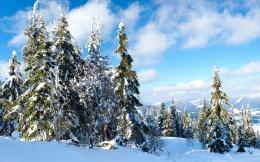 Wallpaper trees, sky, snow, mountain, trail, winter, large 1920x1200 1168