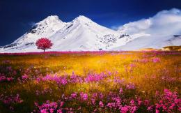 grass, flowers, trees, mountains, blue sky, snow, beautiful, pink 485