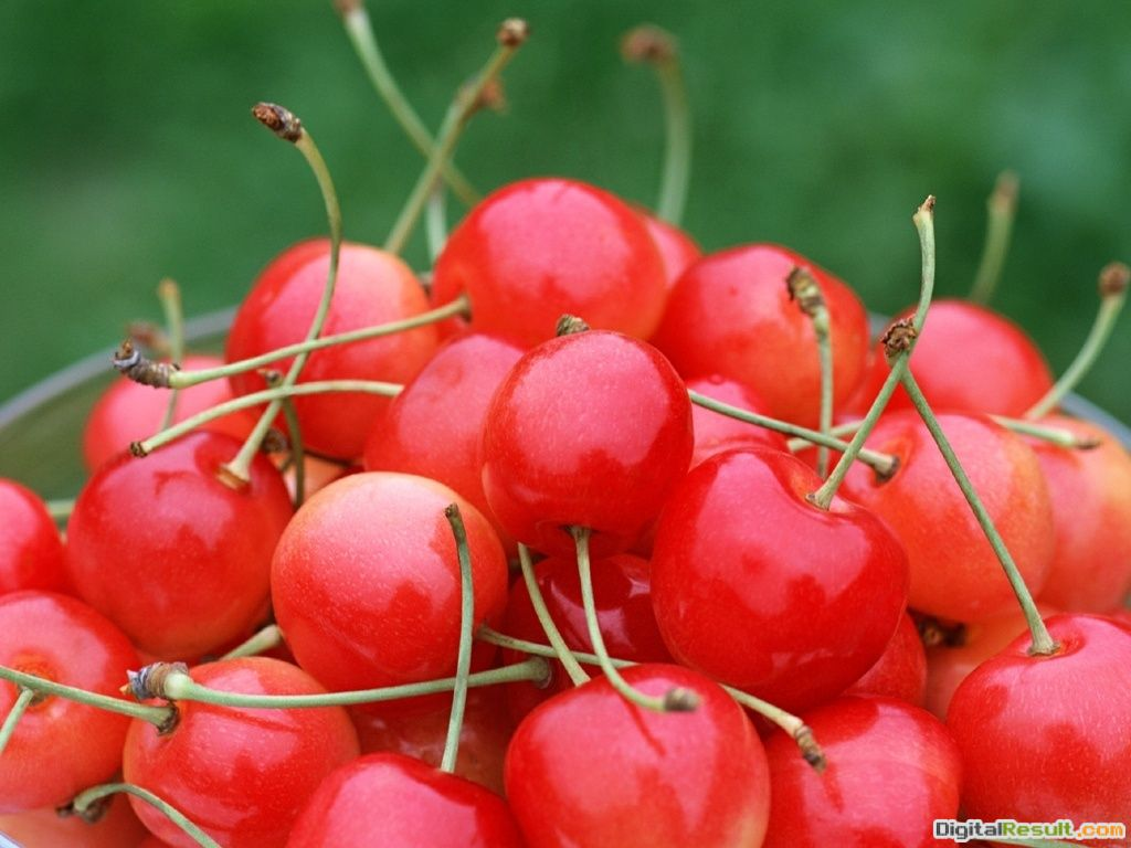 grass eye catching fruits wallpaper fresh cherries red fresh wallpaper 1752